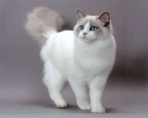 best of cat best cat breed for house pets world