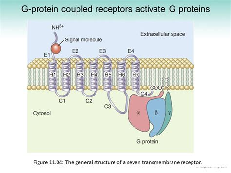 g protein diagram hd wallpapers g protein coupled receptors diagram