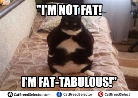 fat cat memes | cat breed selector