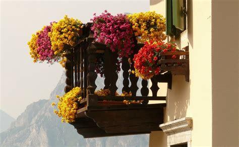 fiori per terrazzo al sole 5 piante perfette per un terrazzo al sole lombarda flor
