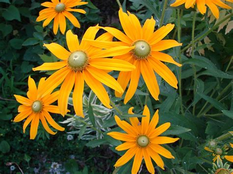 fiori ci sono a settembre giardinaggio i 6 fiori sbocciano a settembre donnaclick