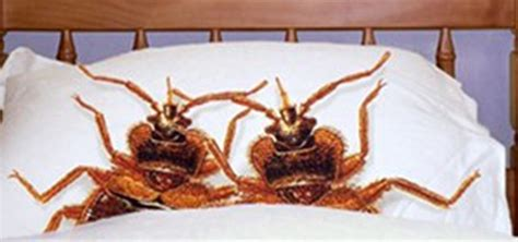 do bed bugs ever go away everything you need to know about bed bugs 171 spiders insects