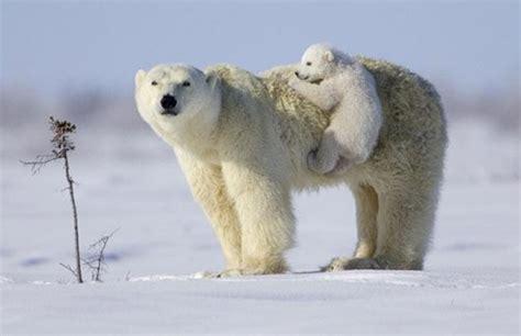 polar and polar history