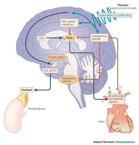 alimenti serotoninergici neuropeptidi oppioidi neuroverde
