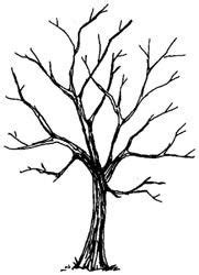 rubber tree coloring page 1000 images about naked trees on pinterest oak tree