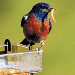 wwwwild bird photocom3gp birds unlimited bird shops 320 w st avon ct phone number yelp