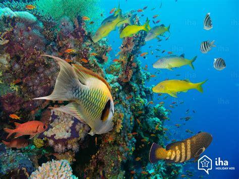turks  caicos islands rentals   vacations  iha