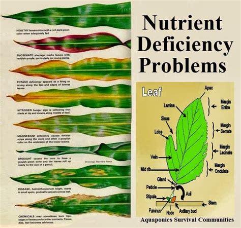 25 best ideas about nutrient deficiency amp disease on