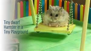 Hamster Swing tiny hamster in a tiny playground