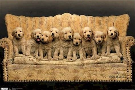 golden retriever puppies ebay animal poster dogs puppies 22x34 golden retriever puppy animals ebay
