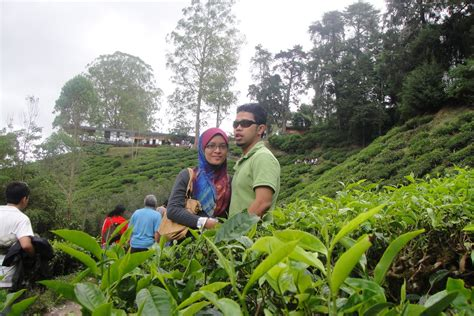 honey to the moon review cameron highlands