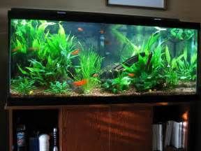 Aquarium Decoration Ideas Freshwater Fish Aquarium Decoration Ideas Home Interior And