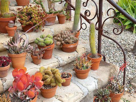 piante grasse fiorite da esterno le piante grasse vendita e consegna fiori a domicilio