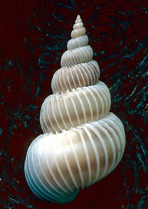 spiral pattern nature 27 best cool pictures fibonacci sequences images on