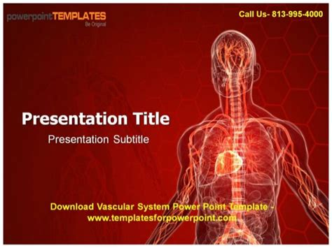 online vascular system powerpoint template and backgroud