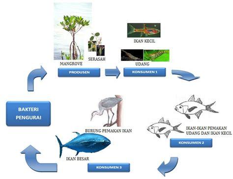Rantai Hewan 30 aliran materi dan rantai makanan pada ekosistem mangrove