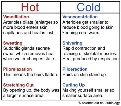 homeostasis: negative feedback, body temperature, blood