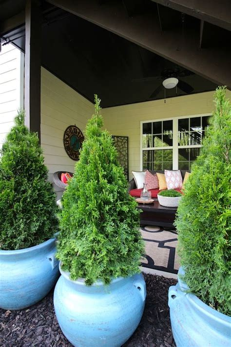 Potted Trees For Patio Privacy Icamblog Potted Trees For Patio
