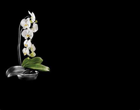 imagenes blancas en fondo negro lapida flores blancas lapidas para nichos
