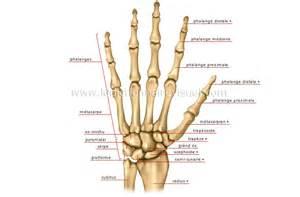 cfsl net forums view topic conseils anatomie