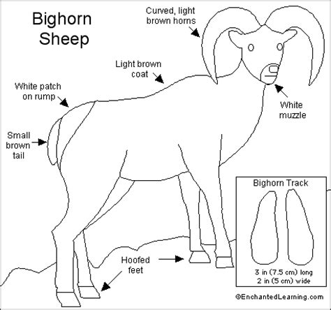 bighorn sheep coloring pages bighorn sheep coloring download bighorn sheep coloring