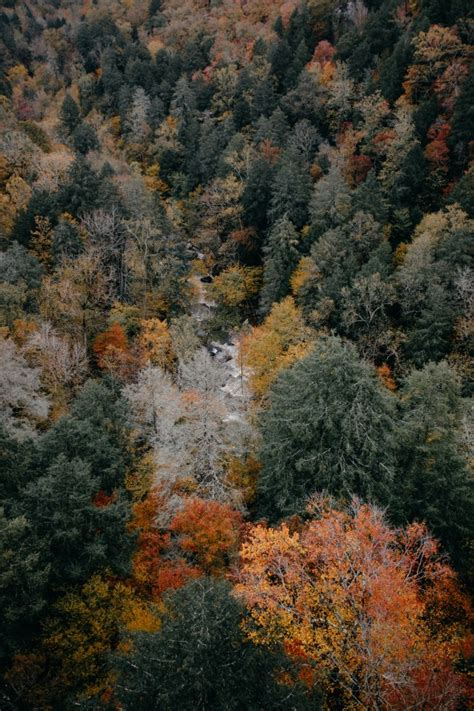 wallpaper forest aerial view wallpapermaiden