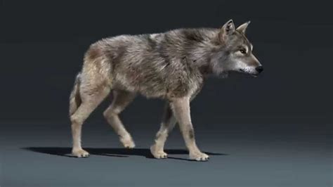 Kaos 3d Umakuka Walking Wolf how to animate a wolf in blender boing boing