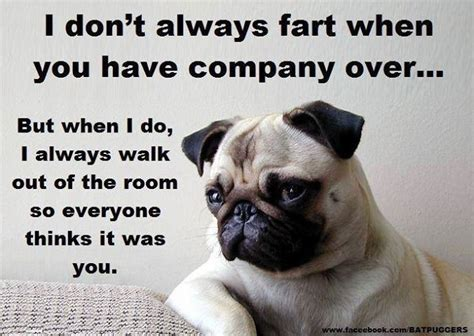 pug humour pug humor sayings pug meme pugs and so true