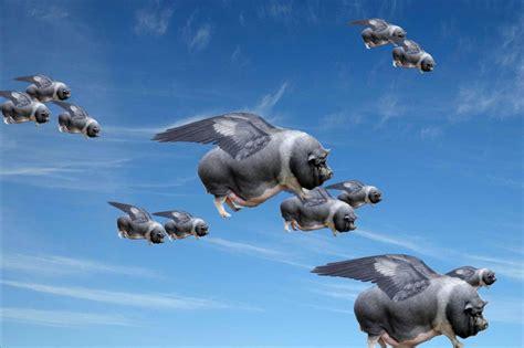 pigs  fly garden culture magazine