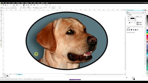 corel draw x6 software price in india background removal in coreldraw corel photo paint doovi