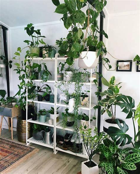 indoor plant shelves best 25 plant shelves ideas on plant ladder