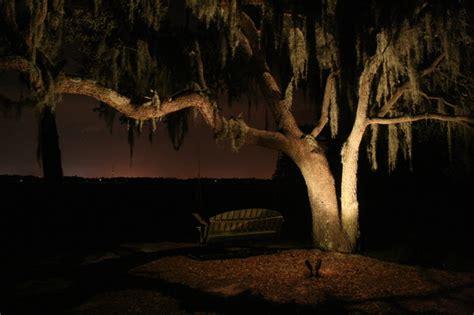 oak tree lighting landscape charleston by