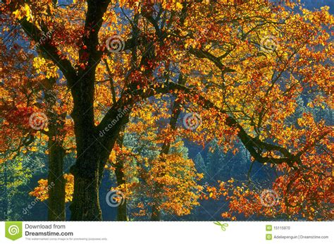 in fall changing leaves of autumn yosemite california stock