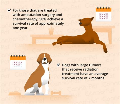 bone cancer in dogs fizzs amazing story osteosarcoma bone bone cancer osteosarcoma in dogs canna pet