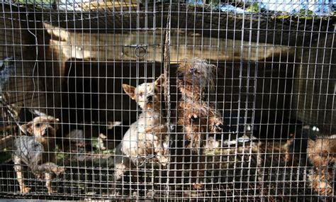 puppy mills in mn states make strides in passing animal protection laws 183 a humane nation