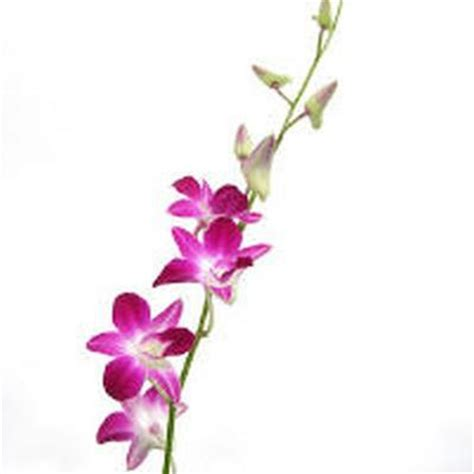 orchideen gestell orchid clipart cliparts co