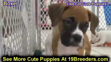 boxer puppies for sale in mississippi boxer puppies for sale in atlanta ga 19breeders springs