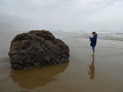 Lu Fog L Oval ludstuff oregon coast
