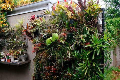 sydney open courtyards gardendrum