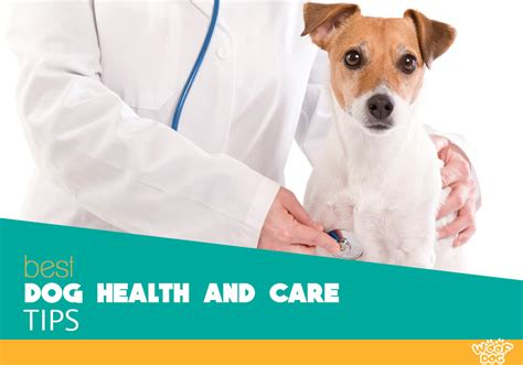 puppy health woof best tips reviews and buyer s guides