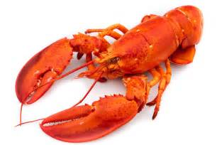 Lobster cook diary