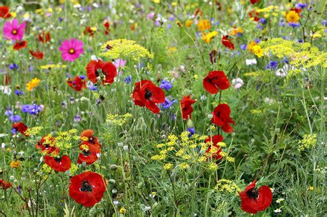 tapis chs de fleur semer un tapis de fleurs d 233 tente jardin
