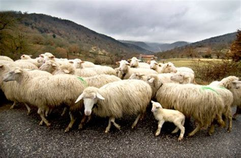 Anti Sheep Mentality by Investigative Report Fiber Related Malnutrition