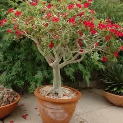 desert gardening using houseplants outdoors in the southwest