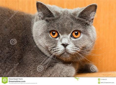 Cat Animal Stock Photo Image