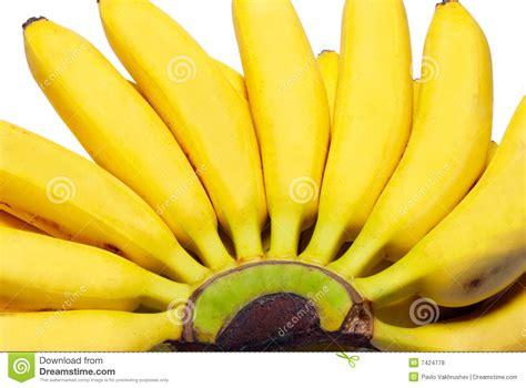 tiny banana of small bananas royalty free stock photos image 7424778