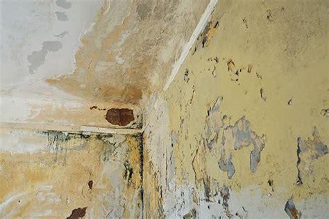 come isolare una parete interna dalla muffa umidit 224 da condensa