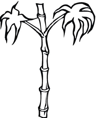 bamboo coloring page supercoloring com