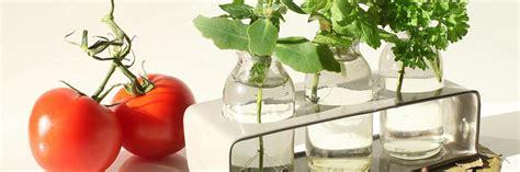 kitchen gardening salisbury greenhouse