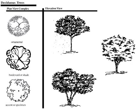 trees symbolism landscape symbols graphic pinterest